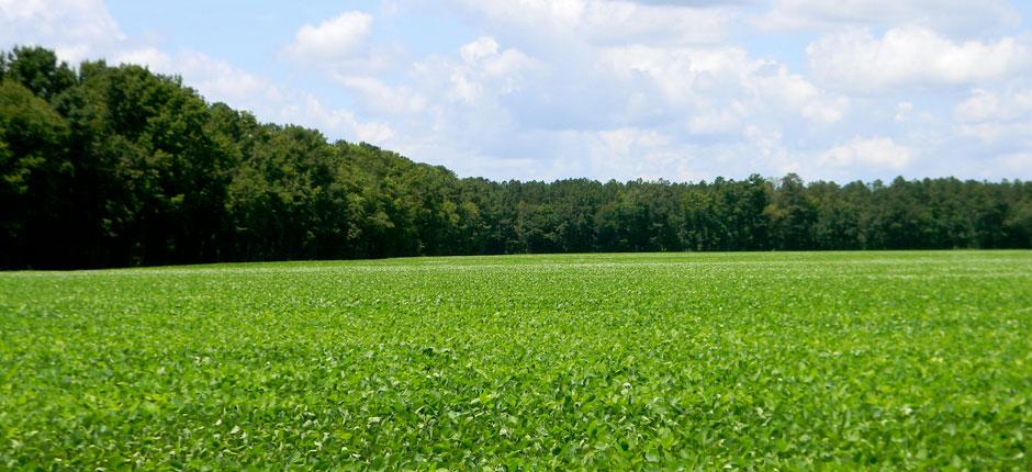 environmental audit